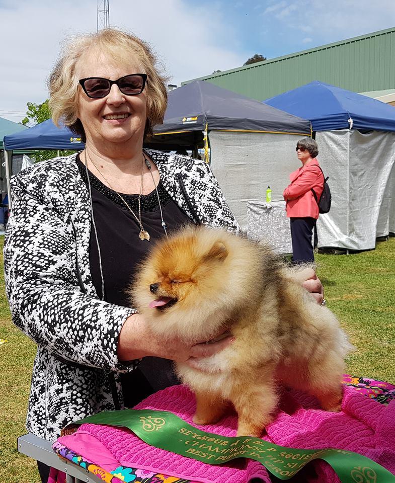 Denise Leo Pomeranian dog